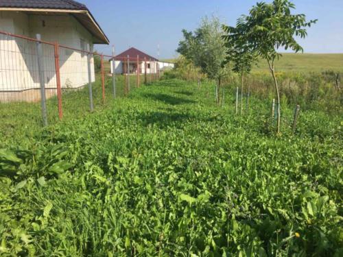 Пример покоса травы в Семково. Фото ДО.